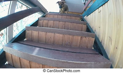 Puppy runs down the stairs - Little dog moving down the...