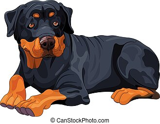 Rottweiler - Illustration of beautiful Rottweiler