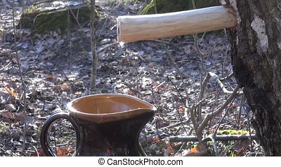 Birch tree sap dripping in clay jug through wooden peg on...
