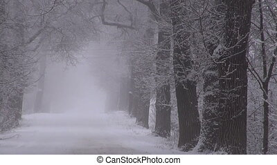 Road between snow covered old trees on misty overcast winter...