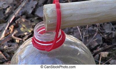 Birch sap dripping in bottle
