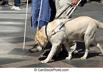 Guide dog is helping bilnd people