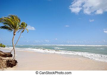 Beach in the tropical caribbean