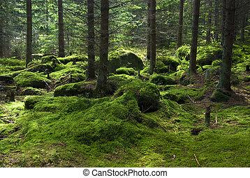el, primitivo, bosque