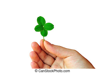 Hand with clover - Isolated hand with green four leaf clover