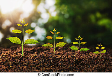 Young plant growing concept idea an