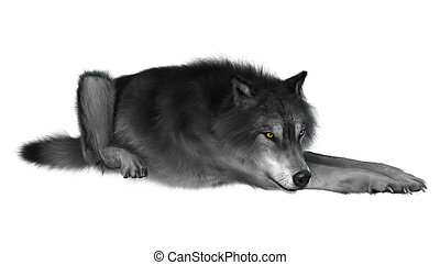 3D Rendering Gray Wolf on White - 3D rendering of a gray...