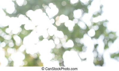 Natural background of defocused green and yellow foliage in...