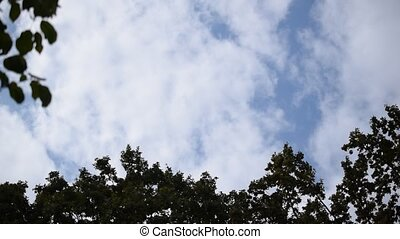 White clouds move above tops of trees