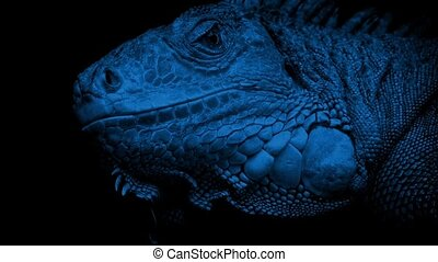 Lizard Looking Around At Night - Closeup of lizard face...