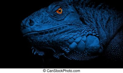 Lizard With Glowing Eyes At Night - Lizard in the dark with...