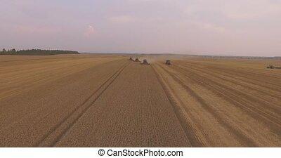 Three Combines Harvest Wheat
