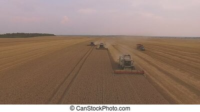 AERIAL: Three Combines Harvest Wheat