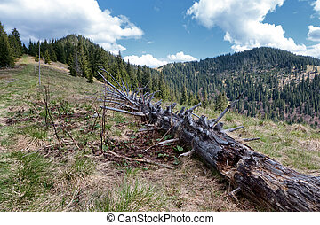 Dead tree in forest - Great Fatra mountain range, Slovakia