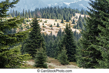 Forest at Great Fatra range, Slovakia - Forest at Great...