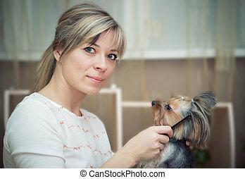 Combing beard of Yorkshire Terrier. - Dog grooming. Combing...