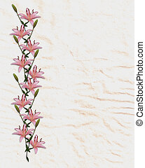 Asian lily flowers border - Image and illustration...