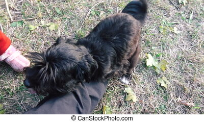 Dog is engaged in masturbation - On human leg little black...