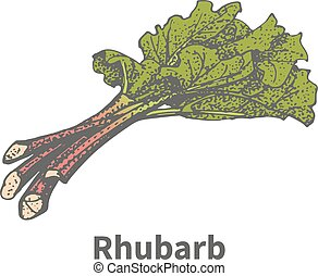 Vector illustration sketch hand-drawn rhubarb