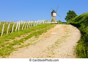 windmill and vineyard near Montsoreau, Pays-de-la-Loire,...