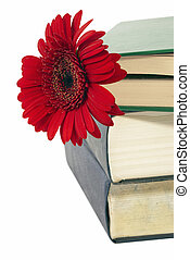 A few books and flower - A few closed books and red flower...