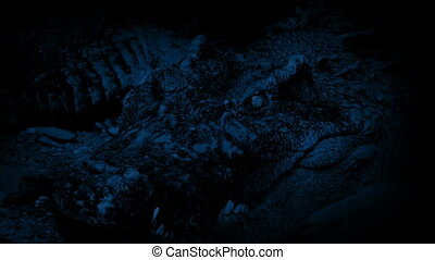 Crocodile At Night Opens Mouth - Huge crocodile opens its...