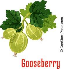 Gooseberry fruit botanical icon - Gooseberry fruit. Isolated...
