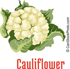 Cauliflower vegetable plant icon - Cauliflower vegetable...
