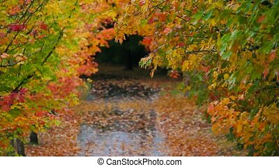 Colorful maple trees in autumn hd - High definition movie of...