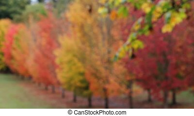 Colorful autumn fall maple trees hd - High definition movie...