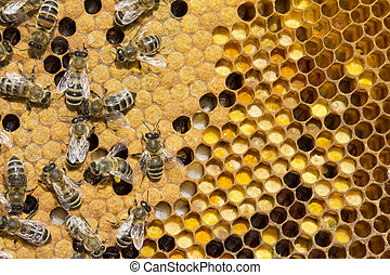 Pollen, larvae, cocoons, bees.