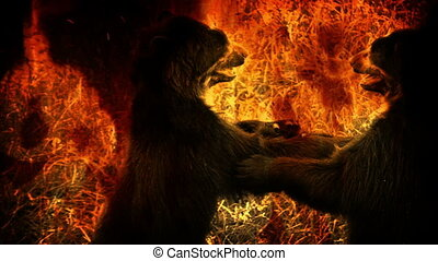 Bears Fight In Flames Abstract - Couple of bears fighting in...