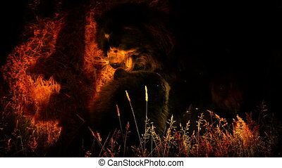 Bears Fighting In Fire Abstract - Bears fighting in raging...