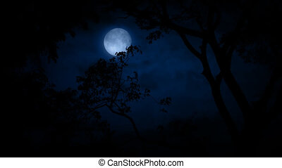 Birds Flying Past Moon In Jungle - Tropical scene of trees...