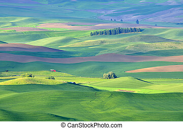 Palouse Red Barn in early morning. - Red barn in early...