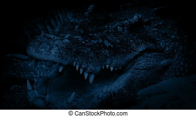Crocodile Breathing At Night - Large crocodile resting with...