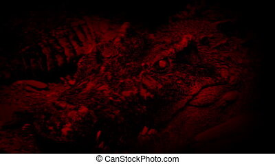 Crocodile Opens Mouth Red Abstract - Big crocodile opens its...