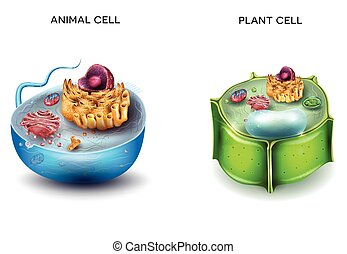 Animal Cell and Plant Cell structure, cross section detailed...