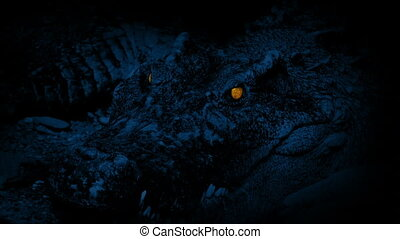 Crocodile Opens Mouth Glowing Eyes - Huge crocodile with...