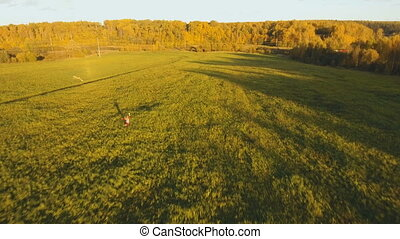 Girl in a field with a kite.Aerial view.