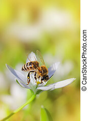 Bee on flower - Bee on a flower close up macro while...