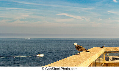 Seagull an the sea - seagull perched on a balcony in the...