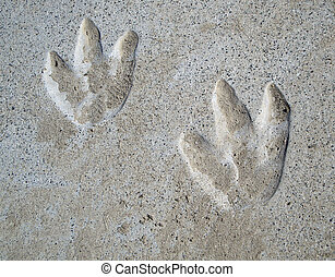 Dinosaur Footprints - School playground, couple of year old...