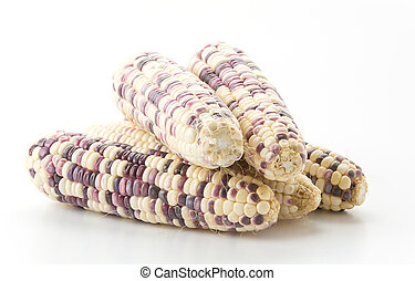 Waxy corn on white background