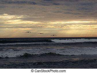 Birds Soar by waves during a cloudy sunset - Birds fly...