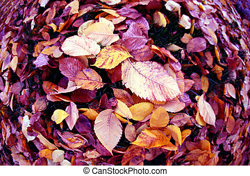 fallen leaves from trees autumn leaves