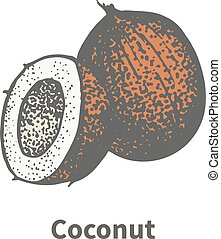 Vector illustration hand-drawn brown ripe coco - Vector...