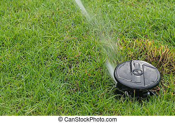 Sprinkler on grass field - Watering sprinkler on grass field...