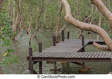 Mangrove forrest Thung Prong Thong - Mangrove forrest or...