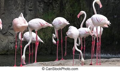 Wild Pink Flamingos At Nature Reserve